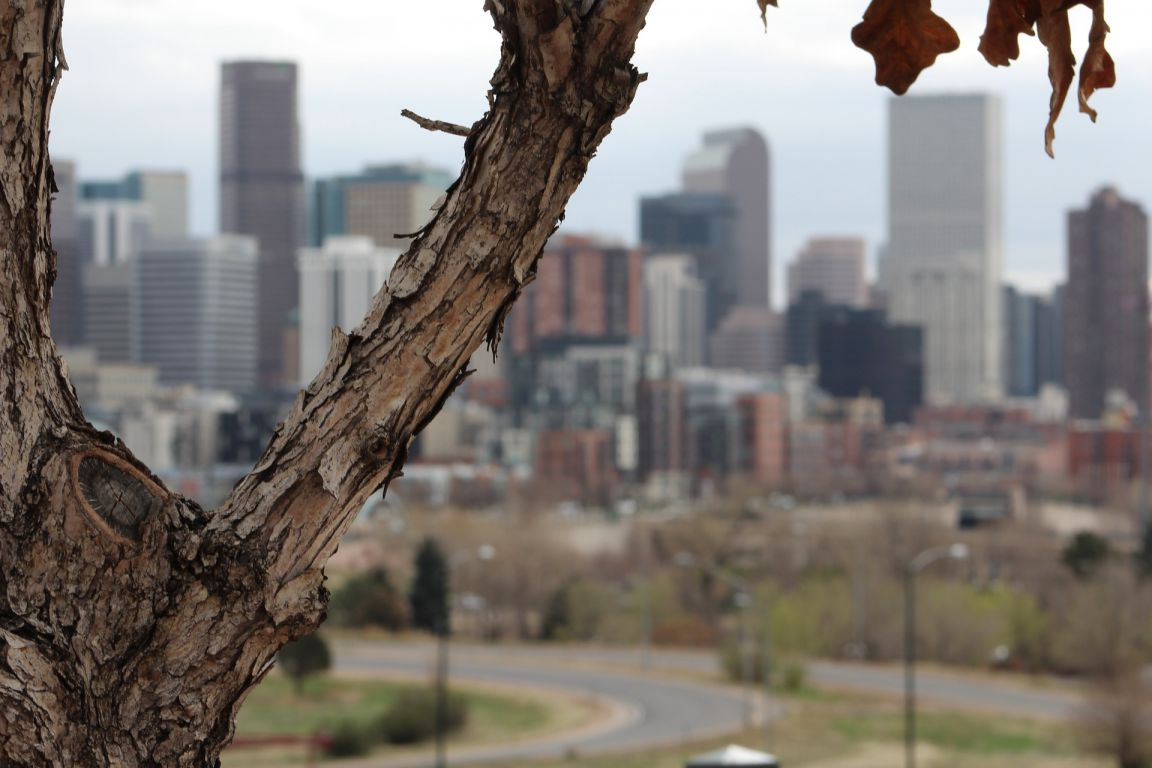 Some of the tallest buildings of downtown Denver, Colorado as seen from near Mile High Stadium with a tree and autumn leaves in the foreground